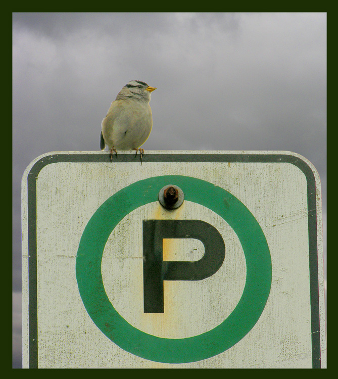 Legally parked....