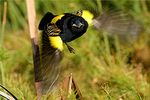 Title: Flight of the Yellow BishopCanon EOS 300D