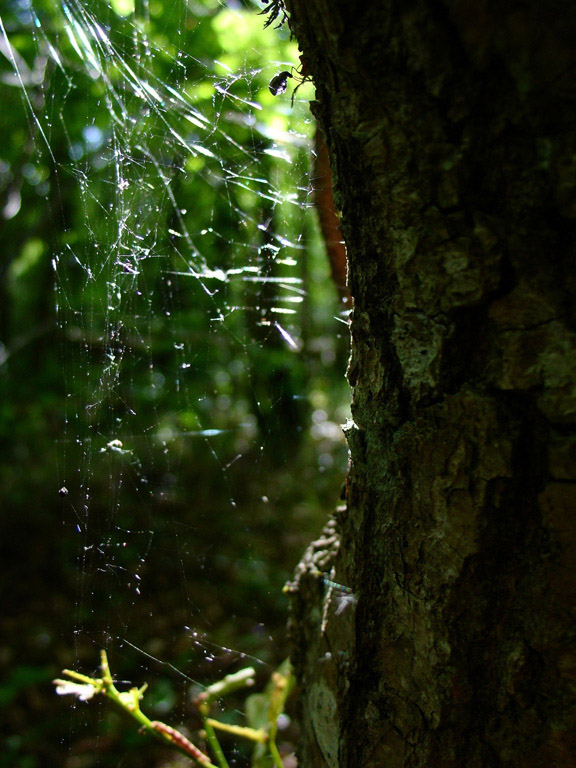 Spider's web in the light