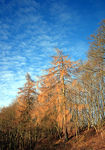 Title: Winter Trees