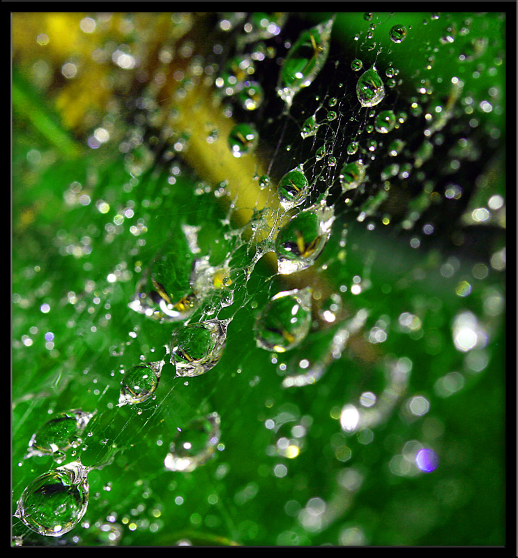 Web After the Rain