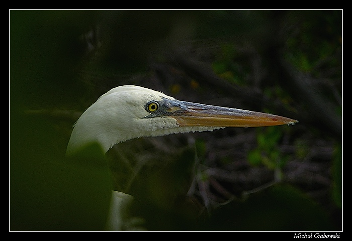 in mangroves