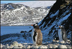 Title: Postcard from Antarctica