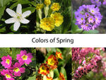 Title: colors of spring - quiz