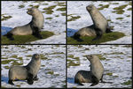 Title: Yoga for seals - a short course
