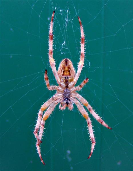 A smiling spider