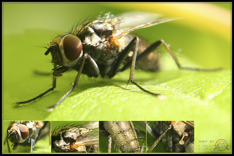 fly act