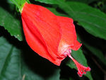 Title: Flower Red