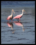 Title: Pink Pair
