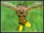 Title: Fugly Fly