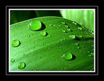 Title: Water Droplets On Leaf
