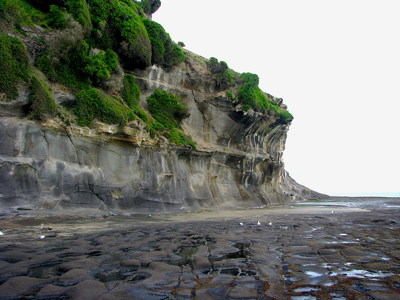 The rocky cliff - Muriwai