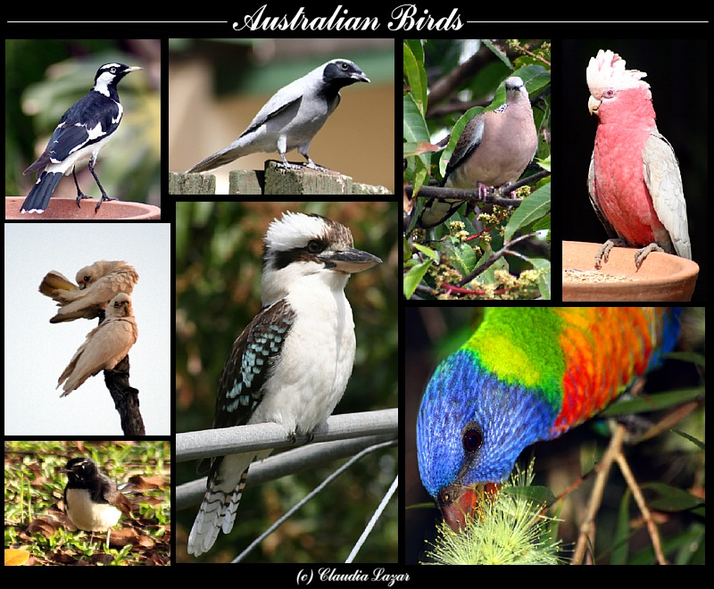 Treknature Australian Birds Photo