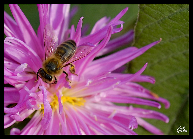 Bee with work
