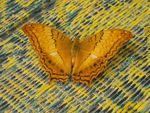 Title: butterfly in the templeCanon powershot S45