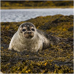 Title: Seal pup