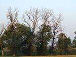 Title: Trees & Storks