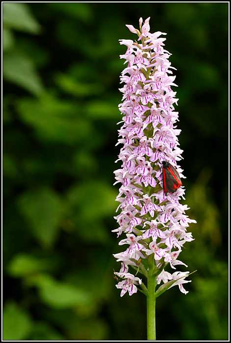 1 Cinnabar Moth, and 5 other insects...