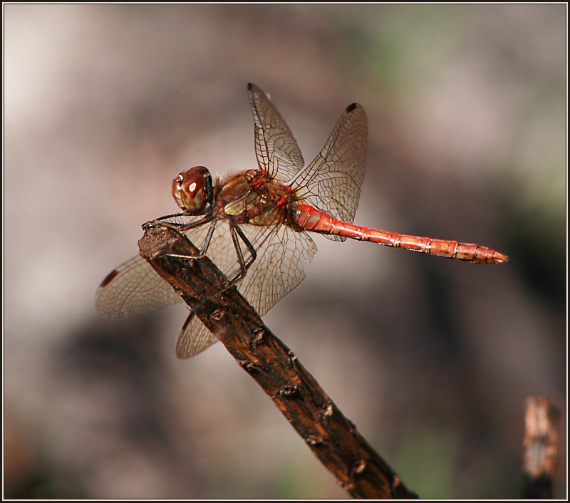 Dragonfly Time