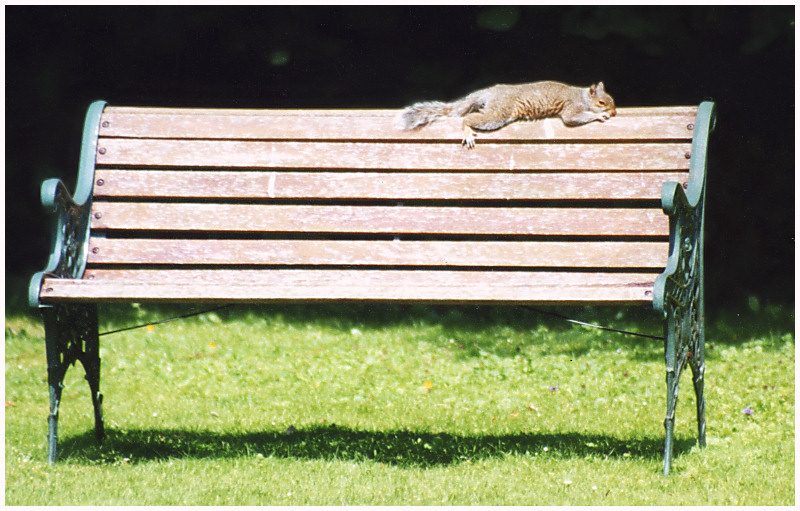 Lazy Days and Lazy Squirrels