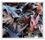 Title: Frosty Autumn Leaves
