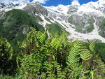 Title: High-Altitude Ferns