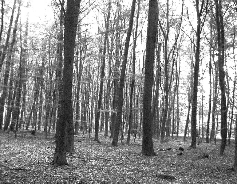 Blair Witch Project?