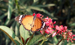 Title: Butterfly in India