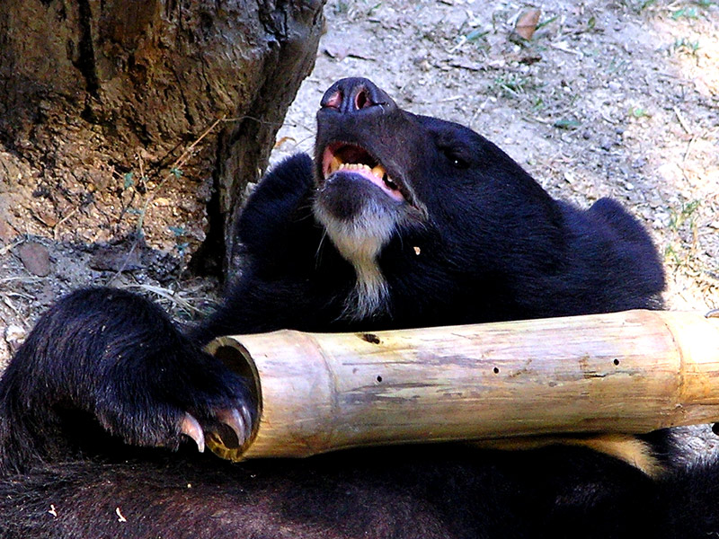 Bears just want to have fun!