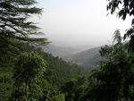 Title: Foggy day in Mcleodganj