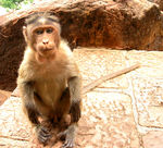 Title: monkey on the steps