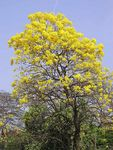 Title: Spring yellow