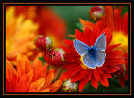 Title: butterfly and colors_2