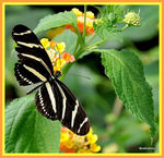 Title: A Butterfly at the Bronx Zoo