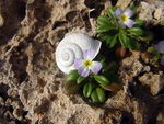 Title: Escargot and flowers