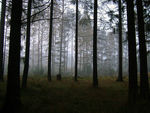 Title: The foggy forest