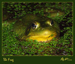 Title: The Frog