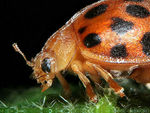 Title: How an Aphid See a Ladybird