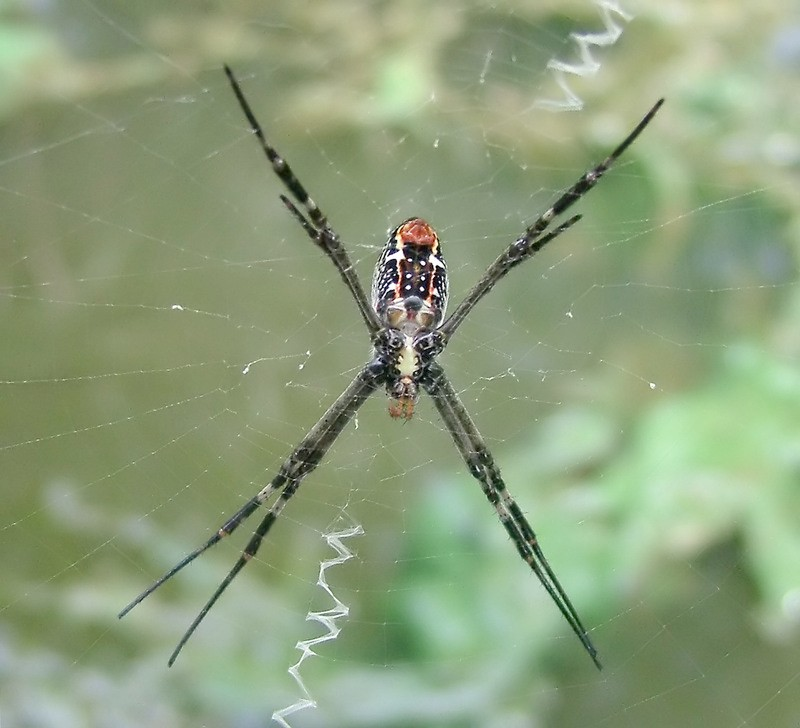 A Saintly Spider