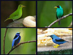 Title: Honeycreepers