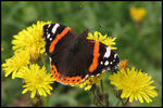 Title: Red AdmiralCanon Powershot S3 IS