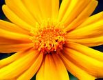 Title: more of yellow!
