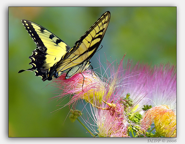 Summer Colors - Butterfly