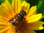 Title: Hover-fly