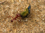 Title: small ant