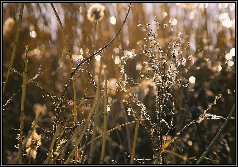 Light in rushes...