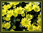 Title: yellow flowers