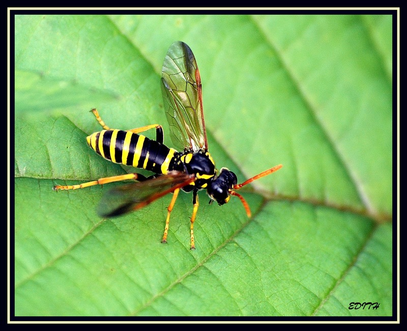 wasp at rest