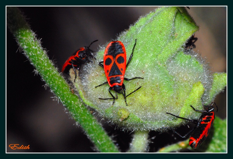 Insect or mask? ? ?
