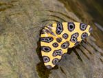 Title: Yellow Buterfly
